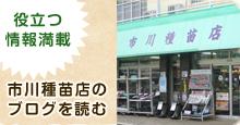 タキイ交配 筑陽(長ナス)