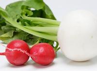 根を食べる野菜